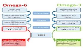 a omega 3 e 6